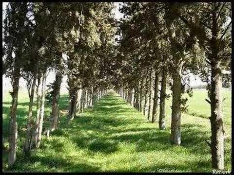 Con đường màu xanh – Lệ Quyên & Lê Hiếu